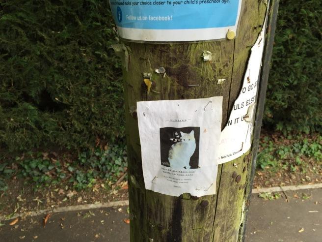 Cat missing Norwich