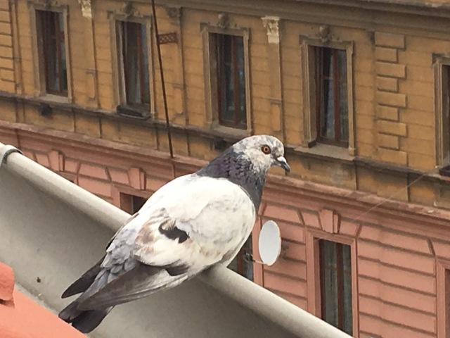 Prague high up