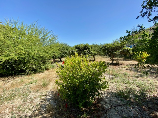 Garden in Heraklion